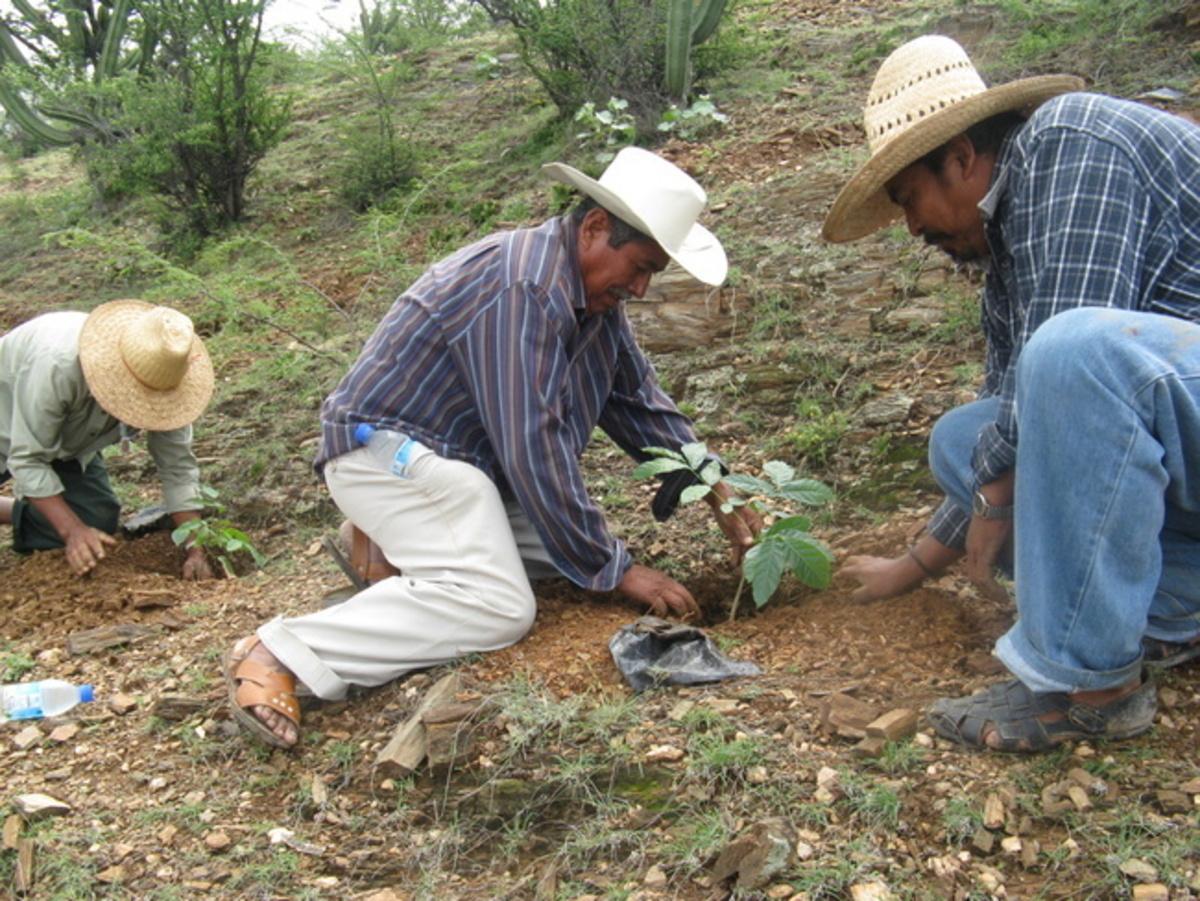 Empresas forestales comunitarias, en riesgo de quiebra por régimen fiscal