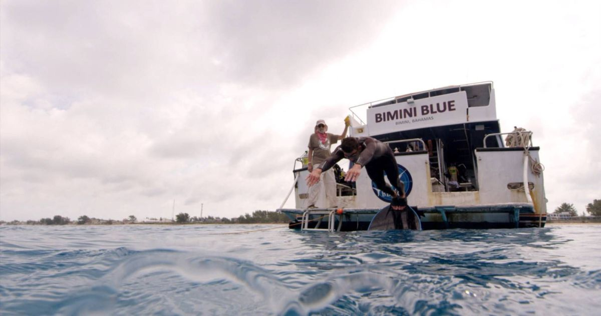 Michael Phelps pierde duelo contra tiburón blanco (Video)