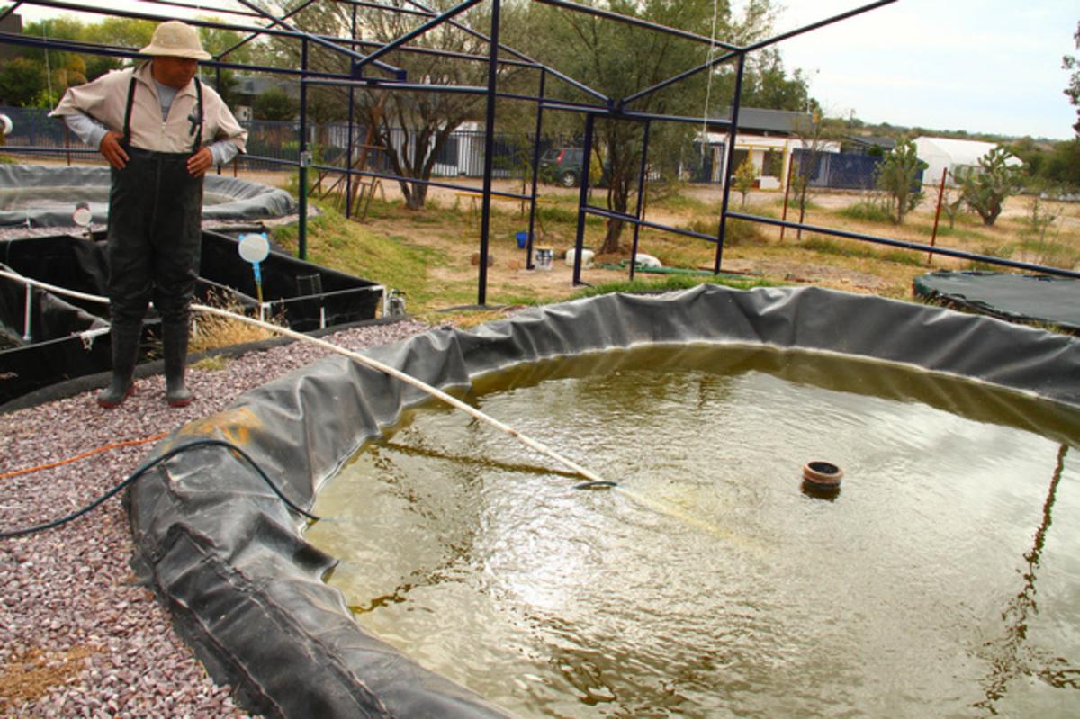 Mejoran estudiantes del ipn alimentaci n de peces en for Granja de peces ornamentales