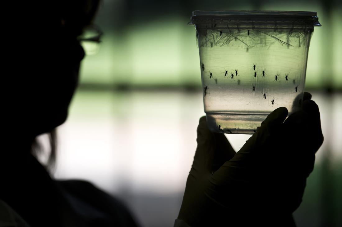 Desarrollan las primeras vacunas contra el zika efectivas en animales