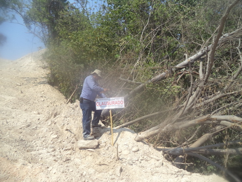 Clausura profepa construcci n de un camino en terrenos for Construccion de viveros forestales
