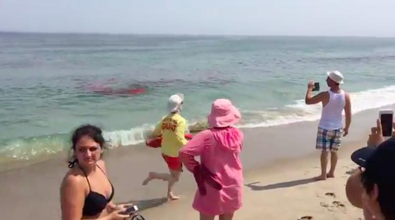 Pánico en el Océano Atlántico por presencia de tiburón blanco (Video)