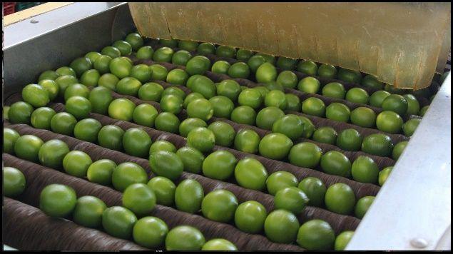 México importará limón argentino