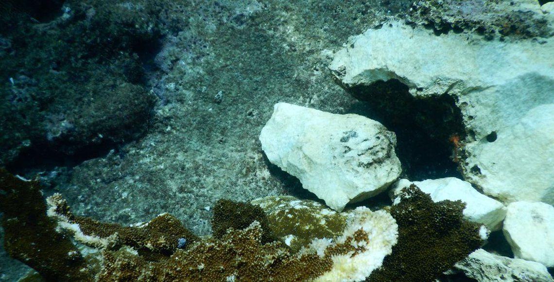 Reportan daño severo en arrecife de Veracruz provocado por buque Antares