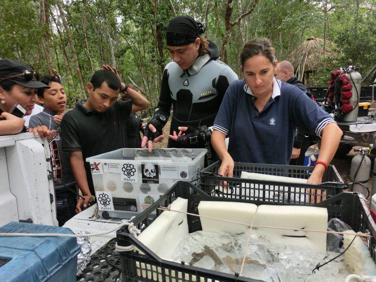 Descubren nuevo género y especie de perezoso gigante en cenote de Quintana Roo
