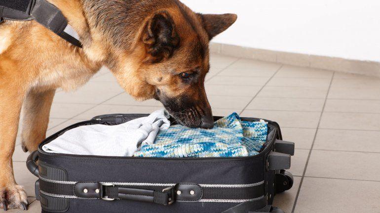 EEUU entrega a México 25 perros detectores para fortalecer cuerpos policiales