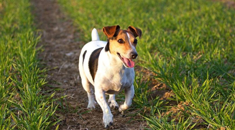 Mafia Italiana ofrece cinco mil euros por la cabeza de un perro